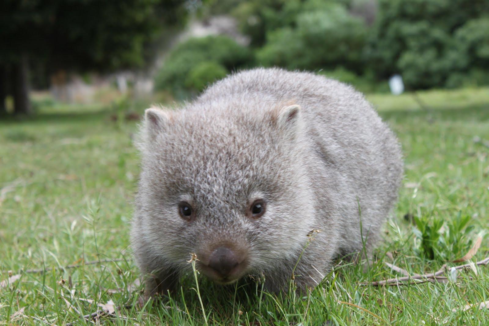 Австралия животные фото