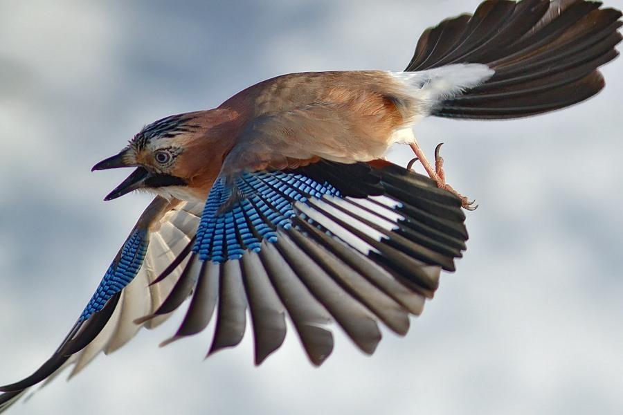 Εγκεφαλικό επεισόδιο μου μεγάλο πουλί