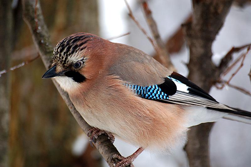 Jay z έχει ένα μεγάλο πουλί