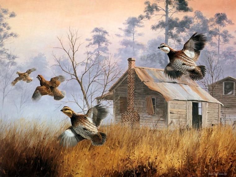 nahé dievčatá s veľkými vtáky